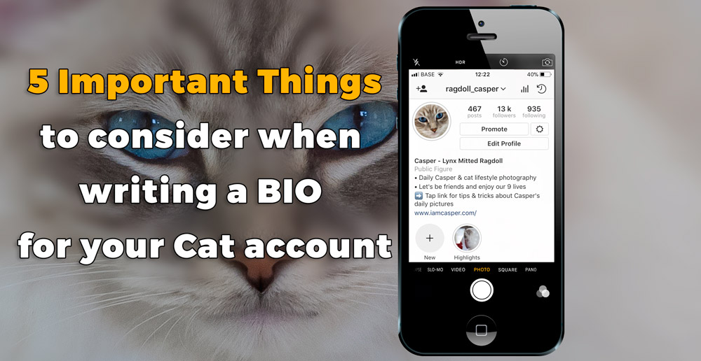 Casper ragdoll from Iamcasper on a picture of a blogpost 5 IMPORTANT THINGS YOU NEED TO KNOW WHEN WRITING AN INSTAGRAM BIO FOR YOUR CAT