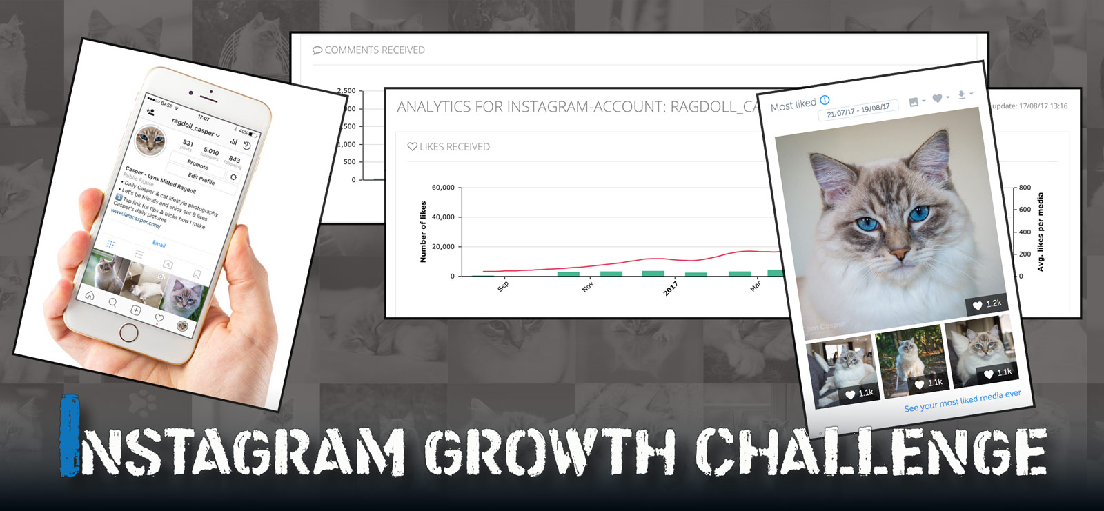 graph of the evolution of Casper ragdoll quantity or number of followers on Instagram growth challenge road to being famous