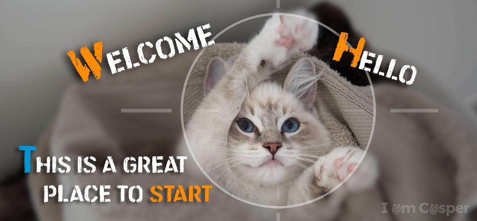 casper ragdoll kitten cat photography start here page waving hello