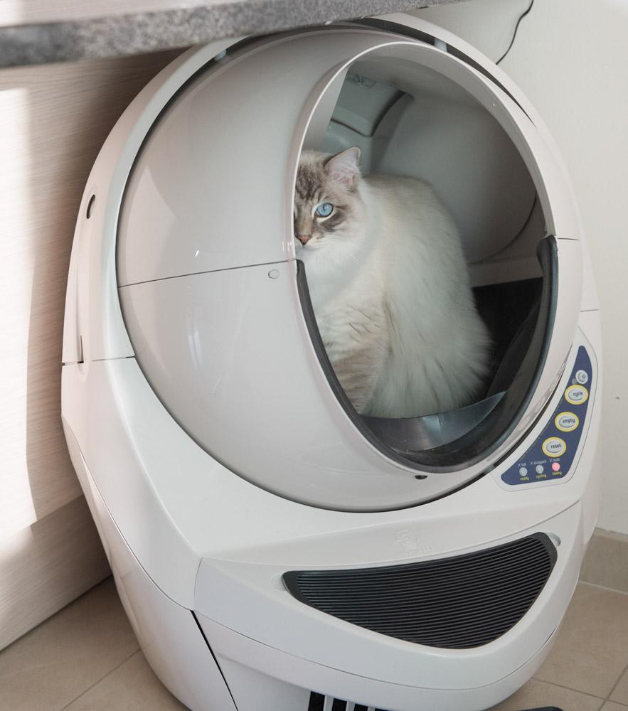 Litter-Robot-Open-Air-Review-self-cleaning-litter-box-Ragdoll-cat-Casper sitting in the robot