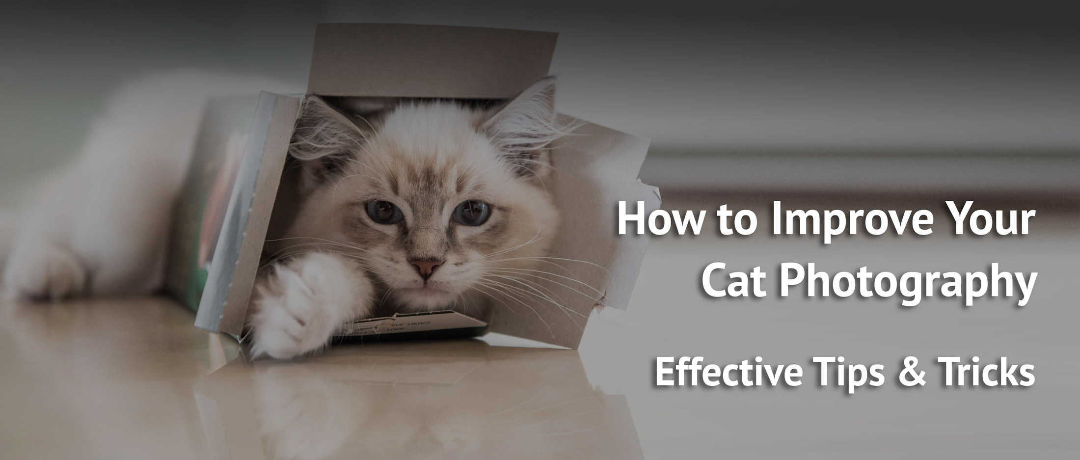 How-to-improve-your-cat-pictures-dramatically-easy-tips-and-tricks- ragdoll-casper looking through a box
