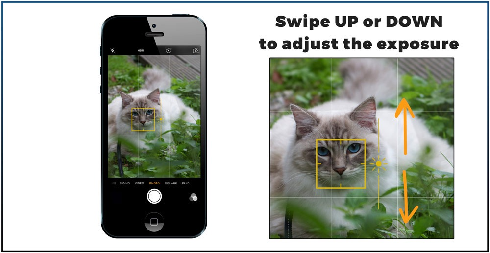7 best Iphone features you need to know to make great cat pictures-swipe on screen to adjust the exposure after tap focus