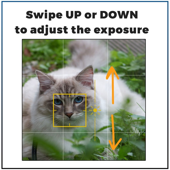 Casper on iPhone feature swipe to adjust exposure 7 best Iphone features you need to know to make great cat pictures-swipe3