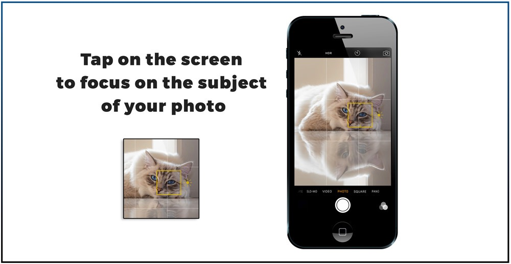 Tap on iPhone screen to focus on a spot in the picture 7 best Iphone features you need to know to make great cat pictures-tap3