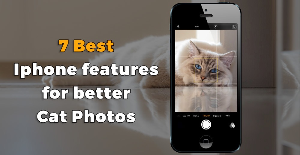 7 best Iphone features you need to know to make great cat pictures how to best use your iPhone Tips tutorial