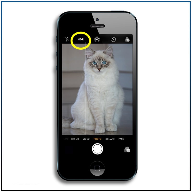 HDR feature on iPhone to 7 best iphone features you need to know to make great cat pictures - hdr2