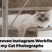 Casper ragdoll cat relaxing on stairs picture used as Instagram Workflow guide with 7 proven steps for cat photography