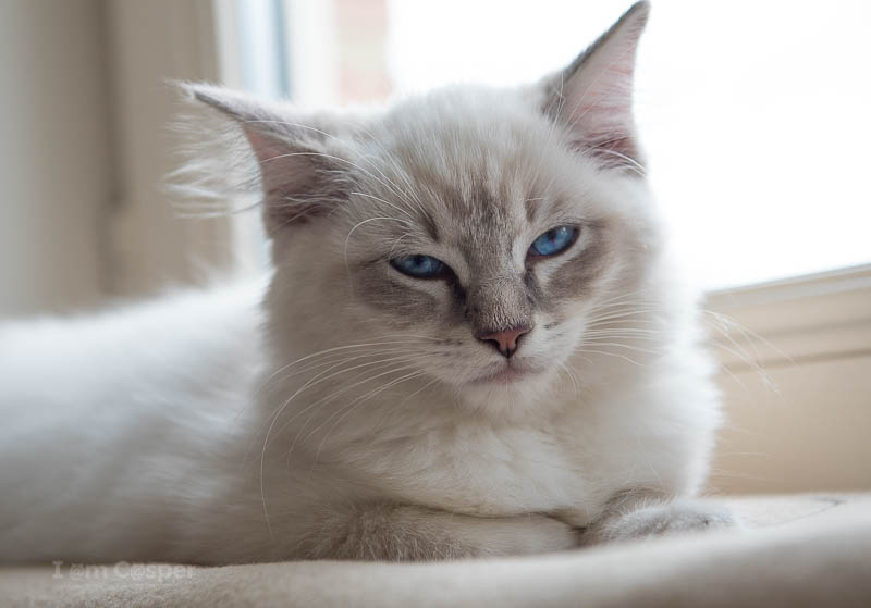 slow blinking is how your cat tells you I love you cat video of showing love blinking