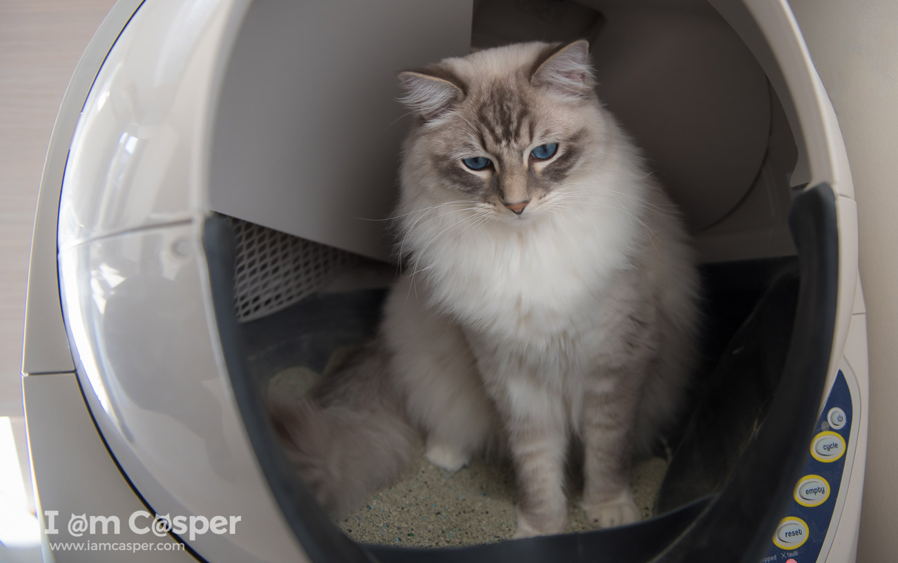 review product Litter-Robot III Open Air Review – Self Cleaning Litter box with catvideo