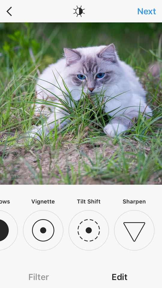 instagram-final-edit-workflow-cat-photography-iamcasper with ragdoll cat playing outside in grass