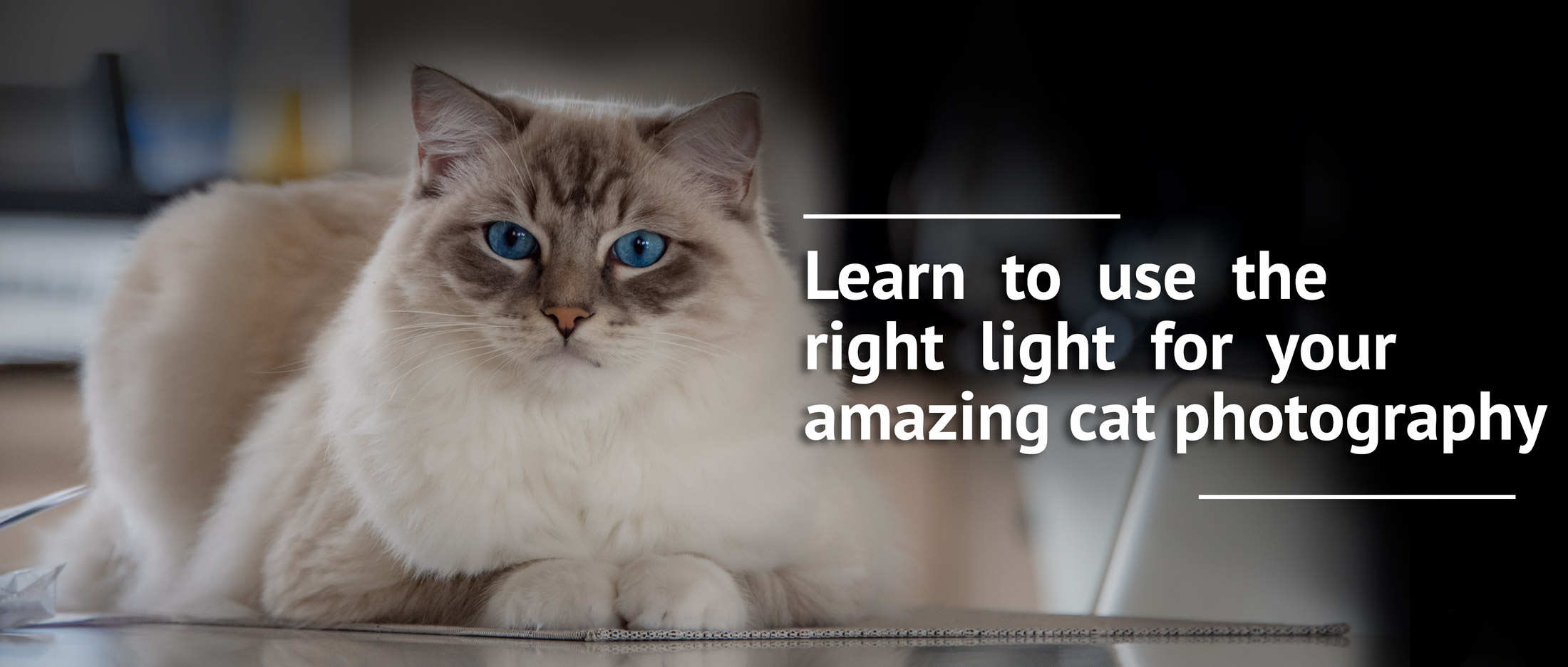 Good light is in many ways a very important component of successful photography. picture to learn how to use good light to improve and take amazing cat photography