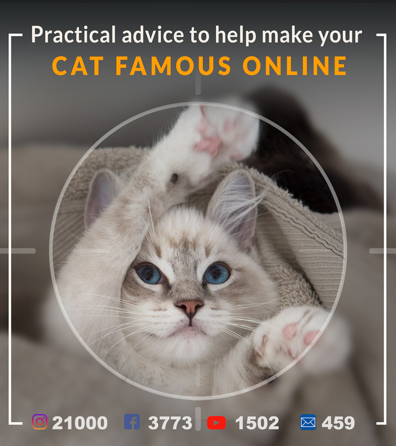 very-practical-advice-to-help-to-make-your-cat-famous-online-social-media
